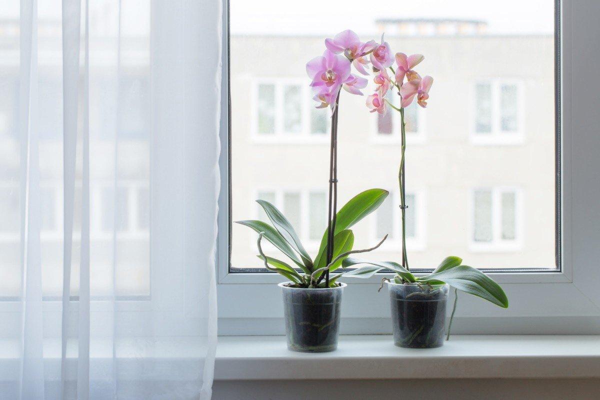 как ухаживать за орхидеями в квартире