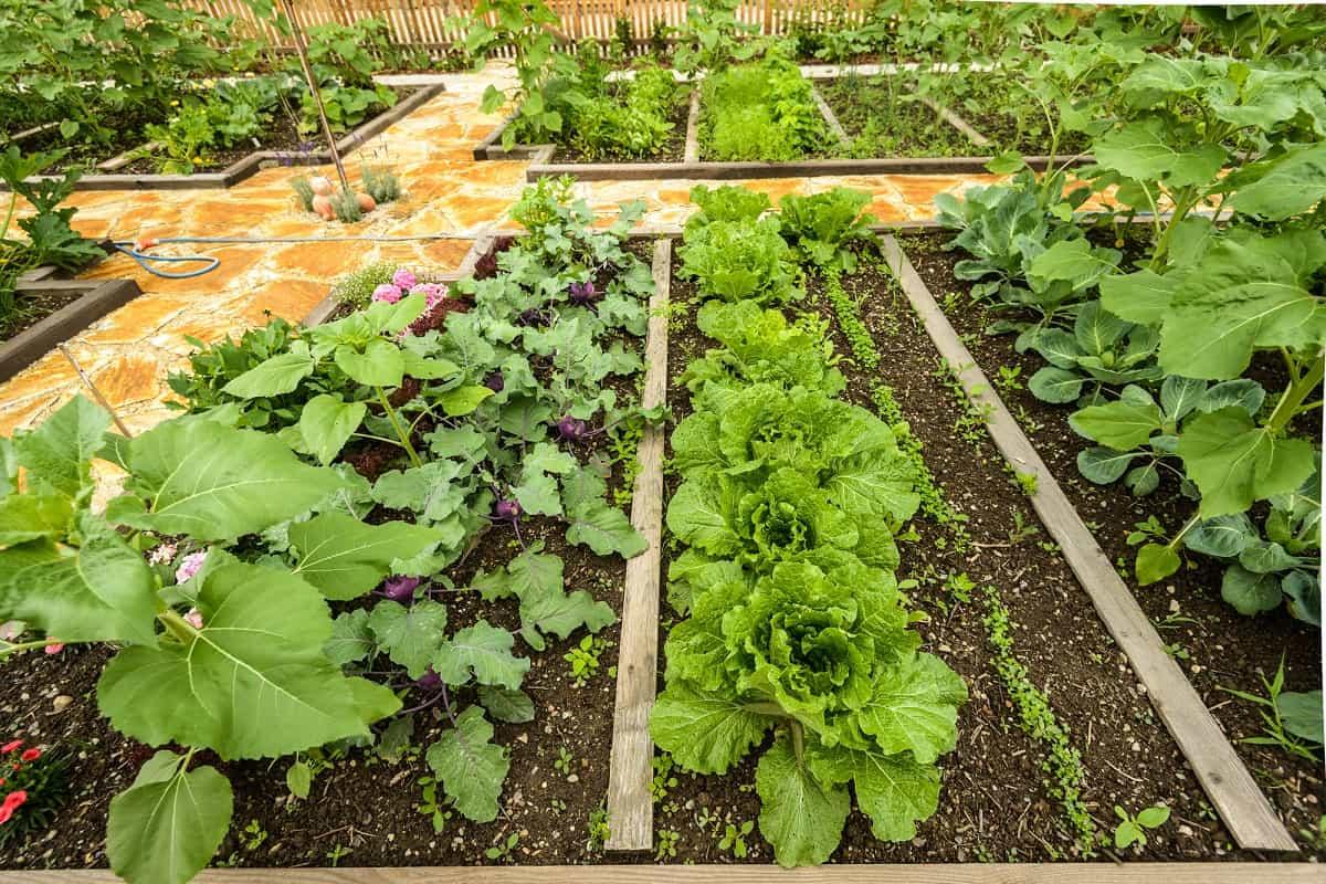Украшение двора овощными грядками