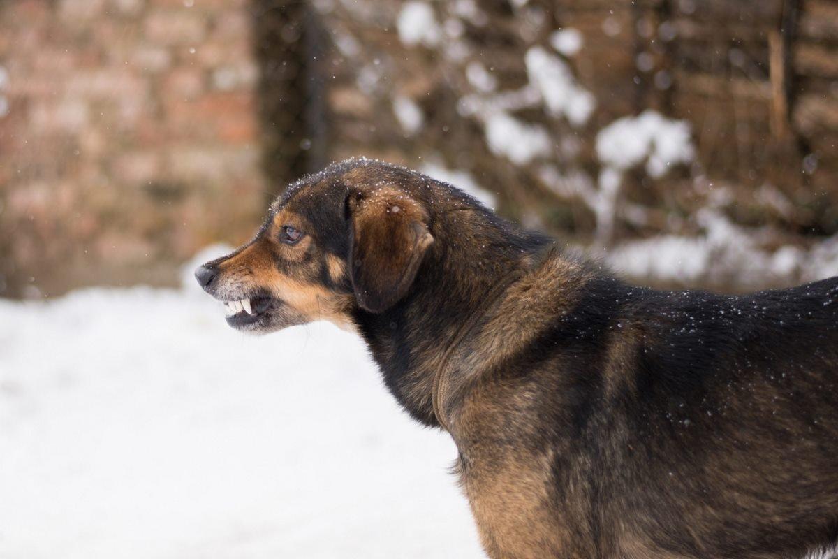 Что делать, если навстречу несется свора лающих собак