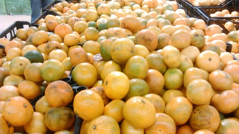 фрукты от паразитов