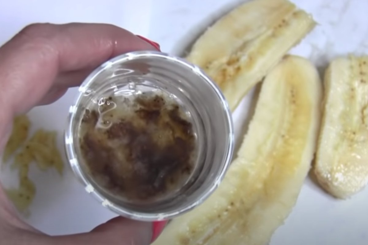 как вырастить банан из семян