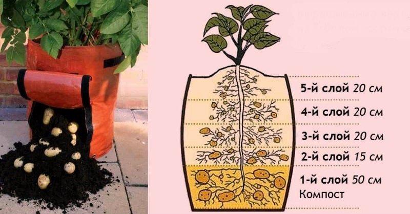 как вырастить картофель в мешке