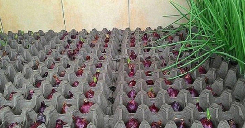 Выращивание клубники: технология, оборудование, видео 16