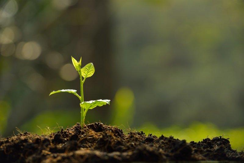 Как посадить ель в горшочке