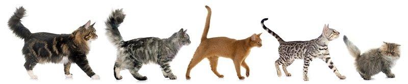 паразиты у котов