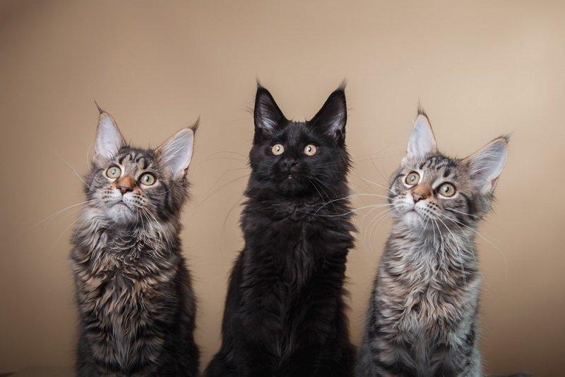 как вывести блох у котов