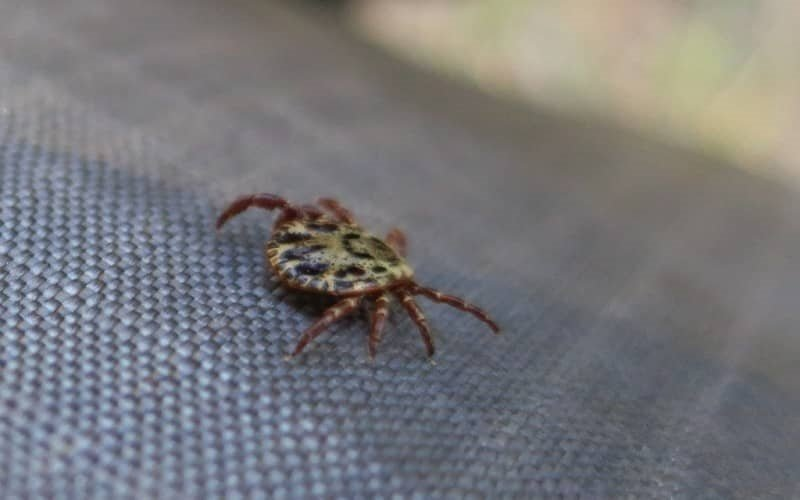 how to protect yourself from ticks in nature