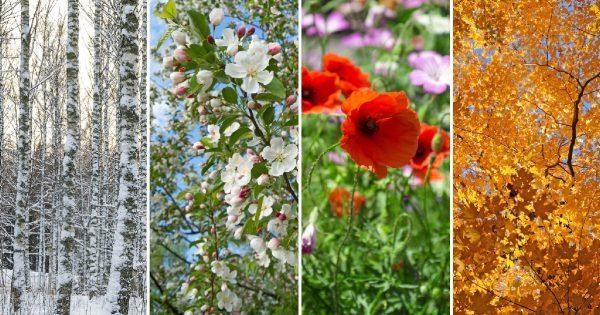 Nature in winter, spring, summer and autumn. Four seasons.