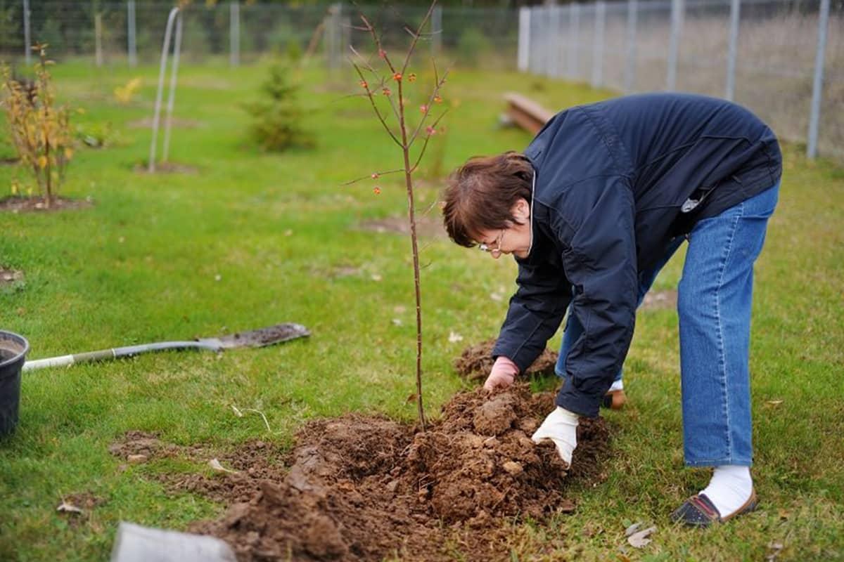 Какие деревья и кусты нельзя сажать осенью