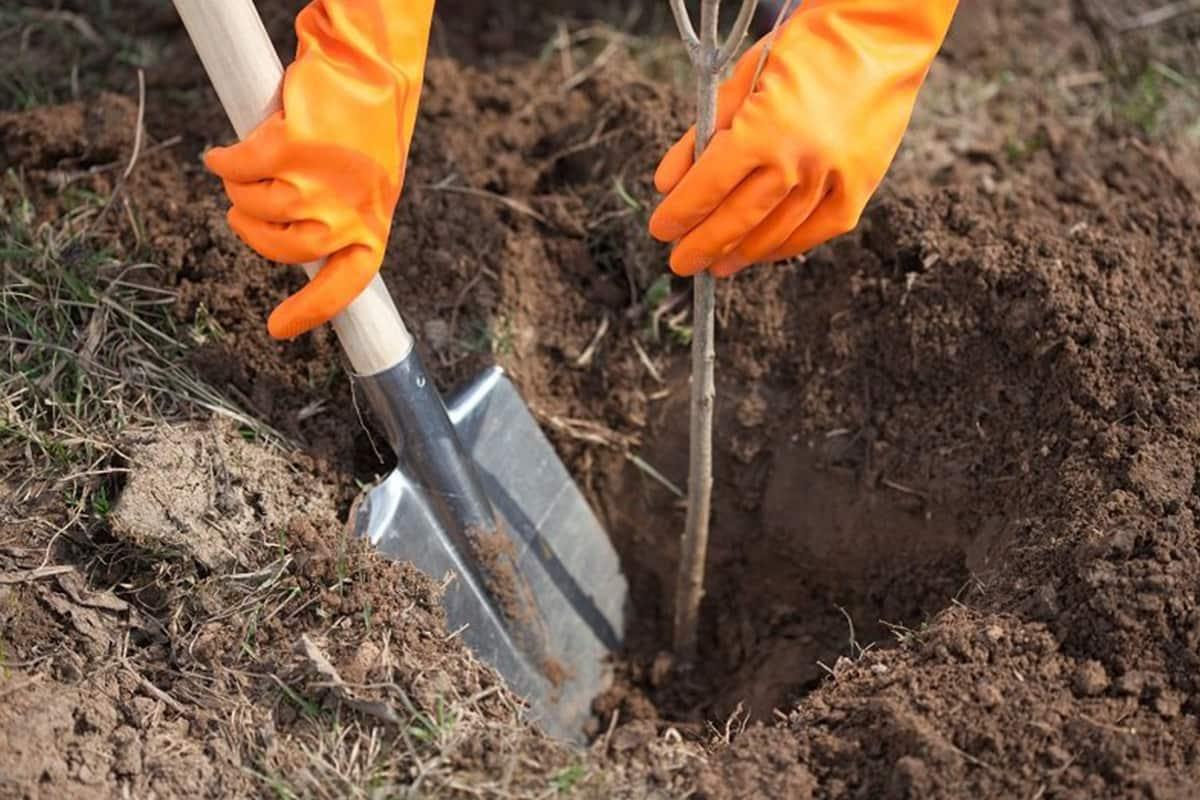 Какие деревья и кусты нельзя сажать осенью деревья, посадки, сажать, деревьев, могут, осенью, растения, можно, хорошо, чтобы, время, DepositphotosКакие, грунт, нельзя, кустов, погода, саженцы, список, стоит, сажают