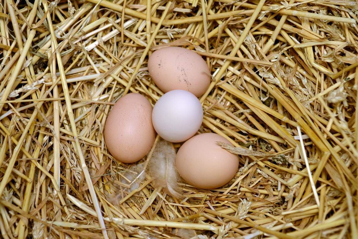 Почему наши хозяйки ищут отборные яйца, а европейские — «куриный горох» Советы,Выбор,Кухня,Покупки,Продукты,Яйца