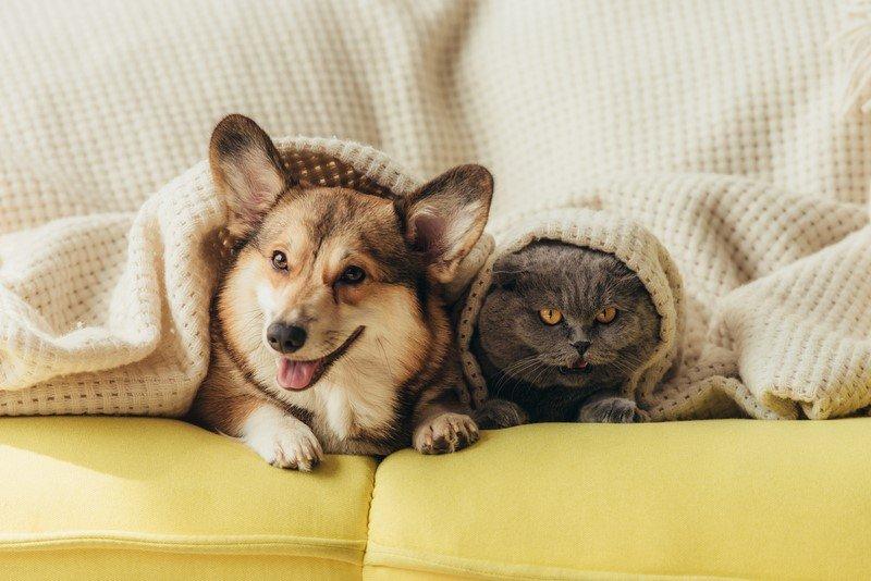 домашние животные в квартире