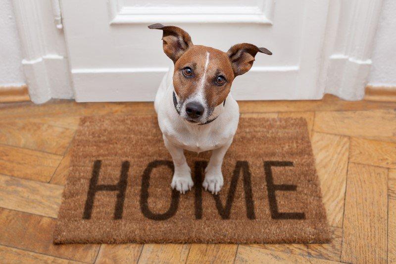 домашние животные в доме