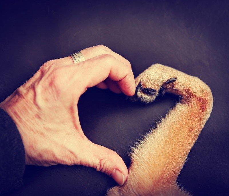 люди и домашние животные