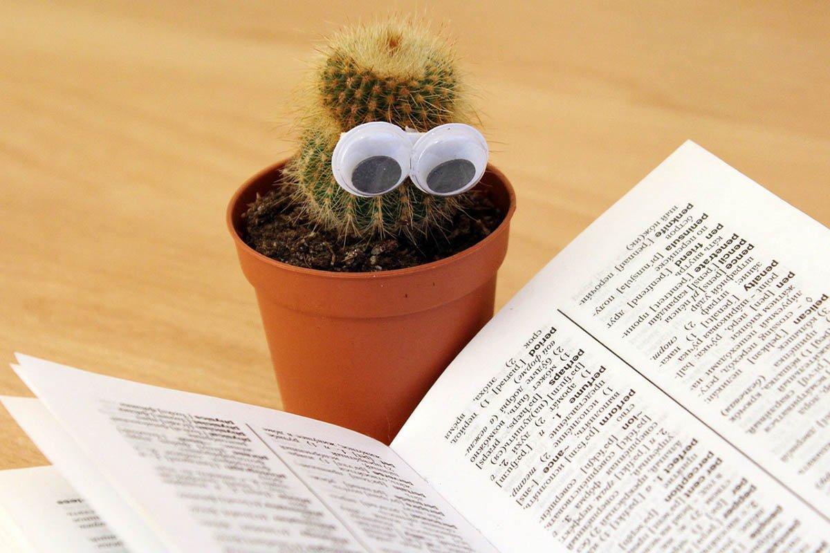 кактус возле книжки