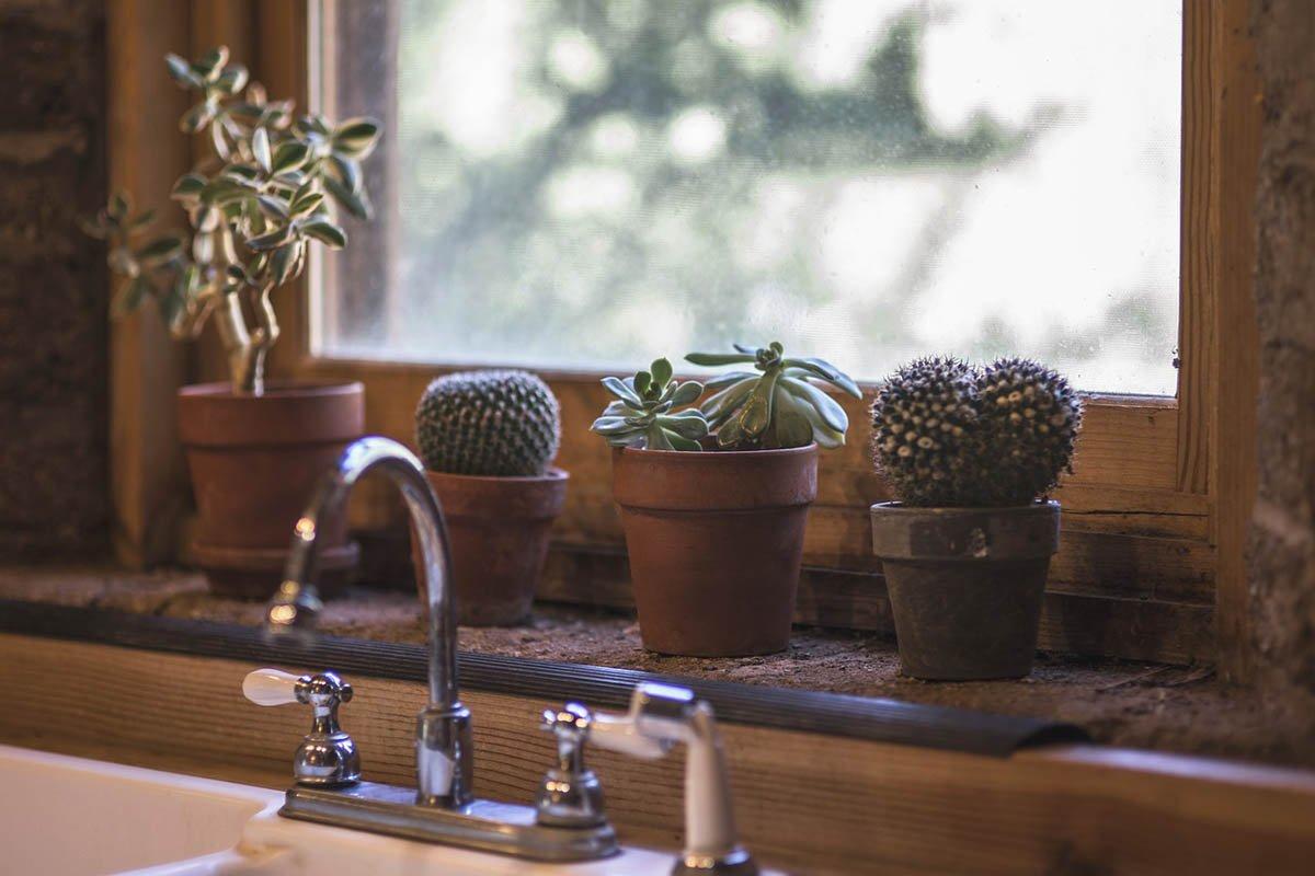 кактусы на кухне
