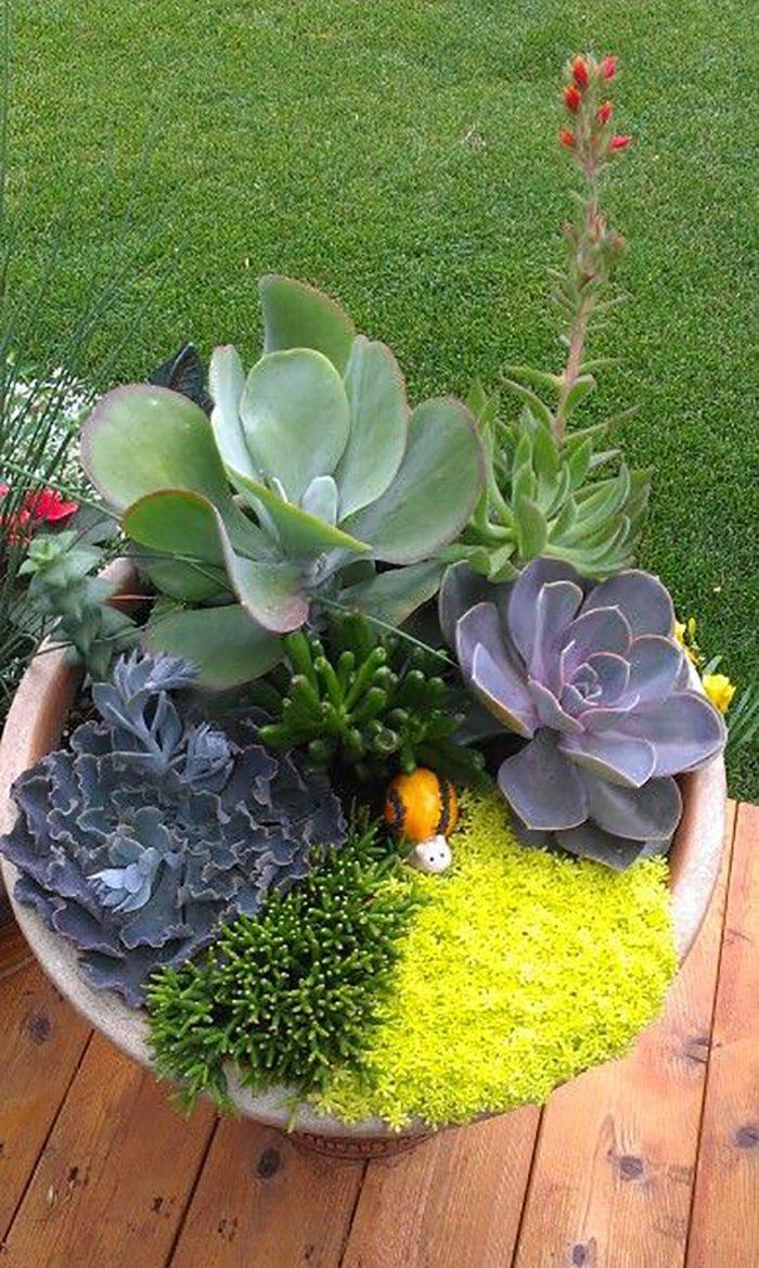кактус и суккуленты