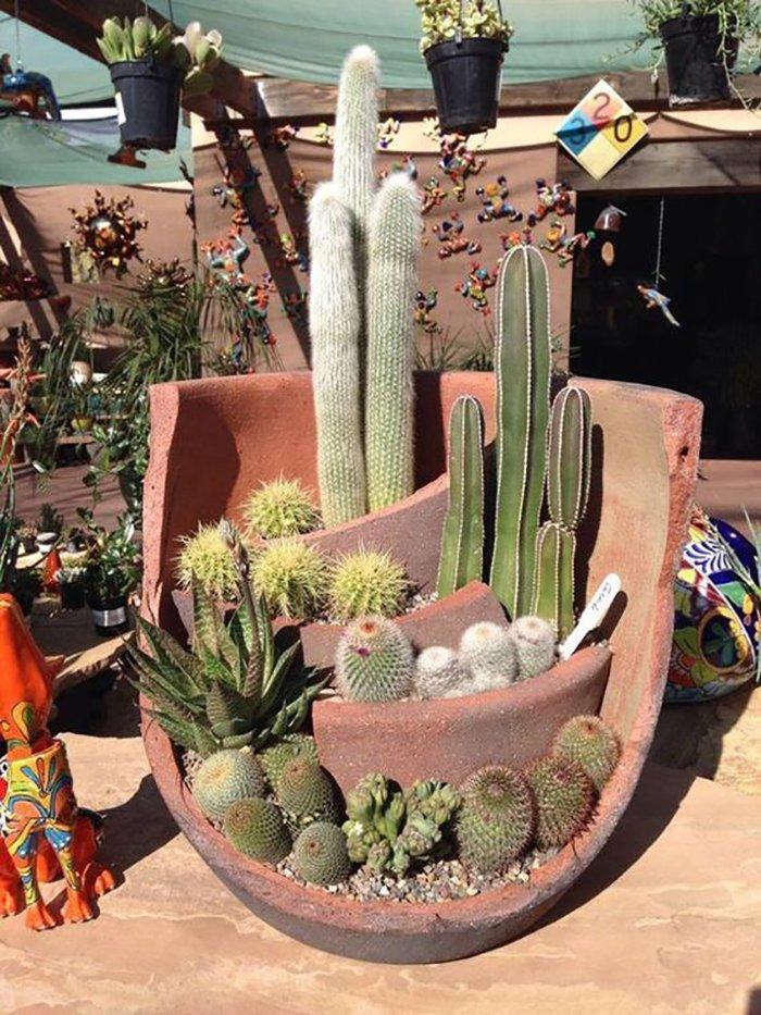 кактусы и суккуленты уход