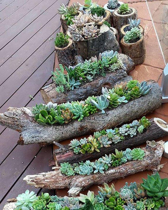 кактусы и суккуленты в саду