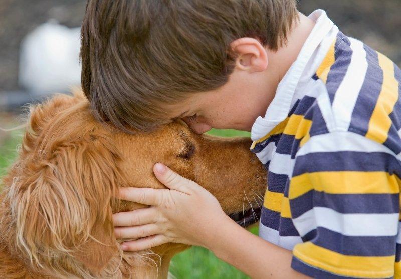 какую собаку завести для охраны