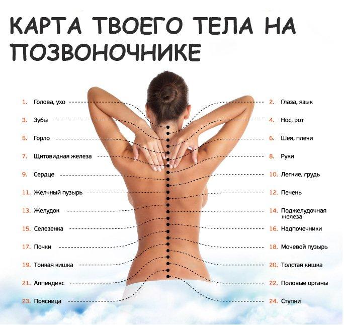 карта тела на позвоночнике