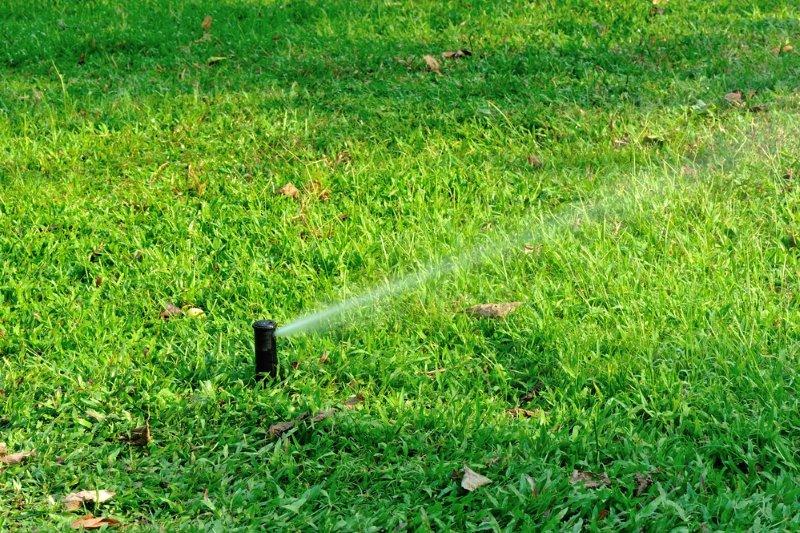 Как засеять газон своими руками Советы,Дача,Дом,Идеи,Растения