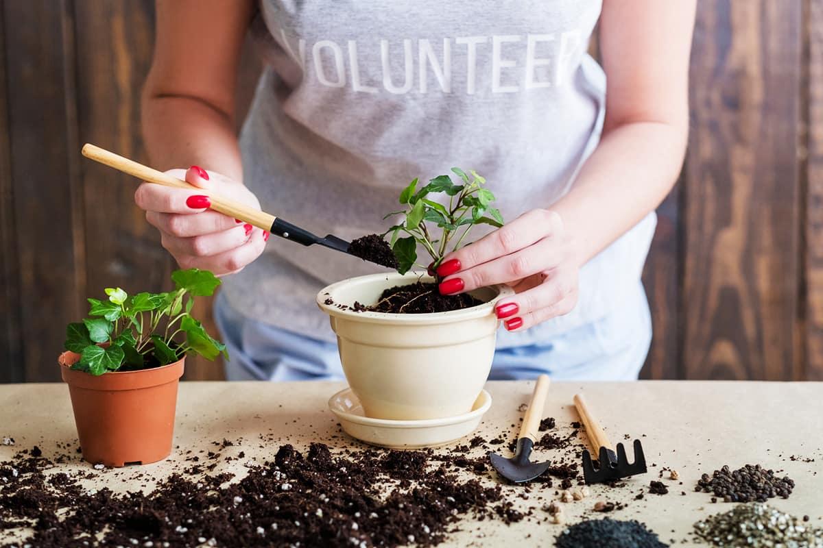 пересадка комнатных растений 2021