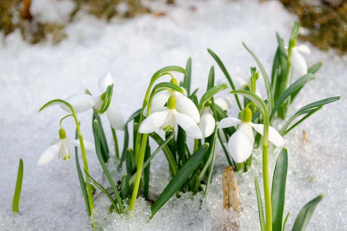 Когда придет весна в 2022 году: прогнозы синоптиков