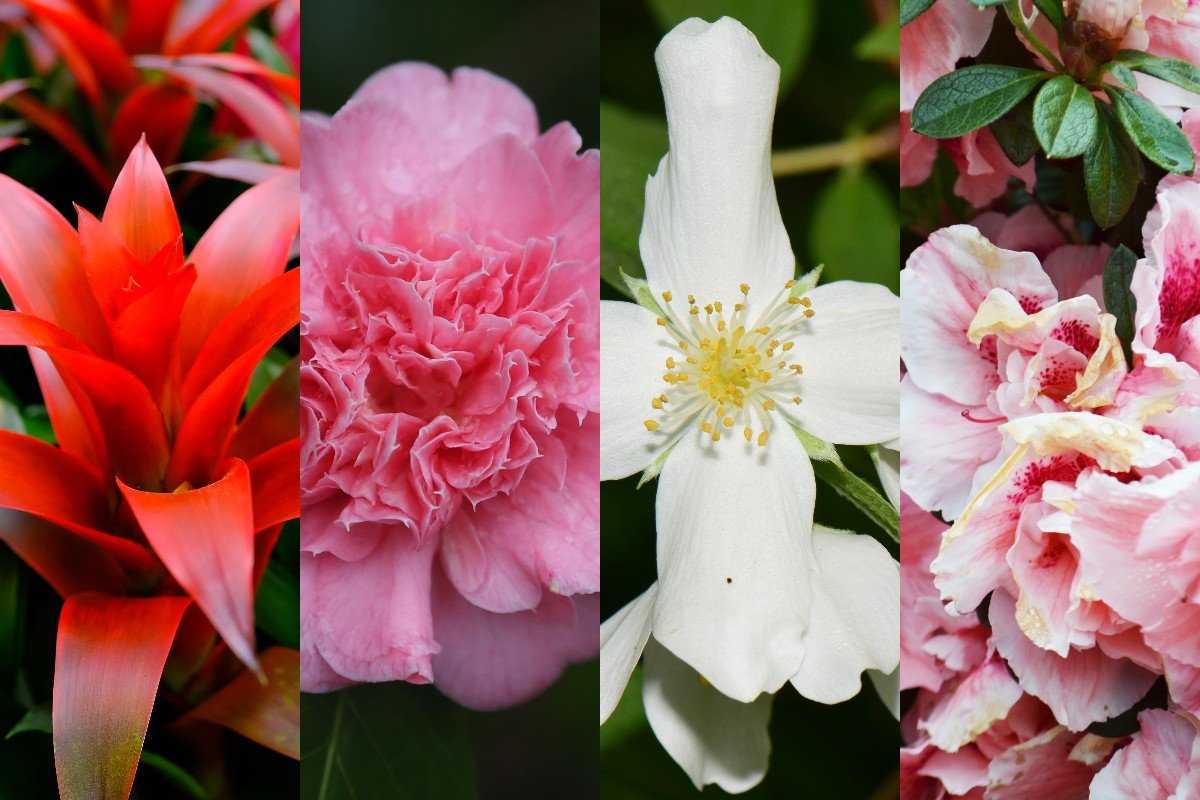 Комнатные растения, что нагло и пышно зацветут в зимние морозы