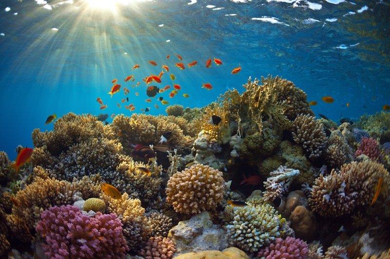 коралловый риф аквариум