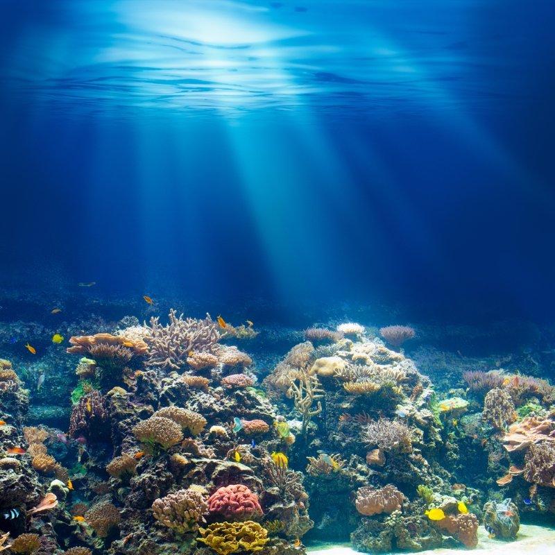 коралловый риф картинки