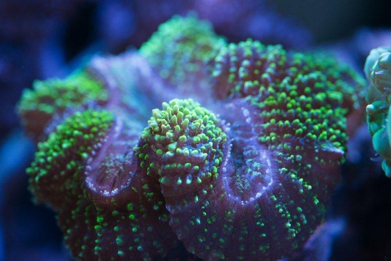 коралловый риф биология