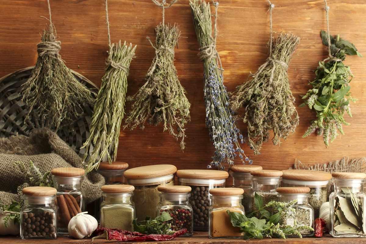 Сажаю на даче валериану с целью отпугнуть комаров Советы,Лекарства,Польза,Растения,Сад,Травы