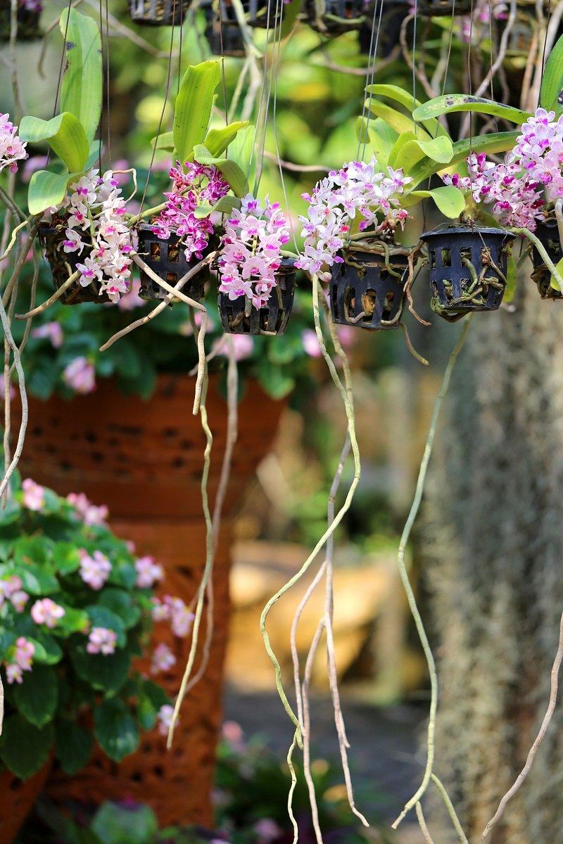 корни орхидеи белеют