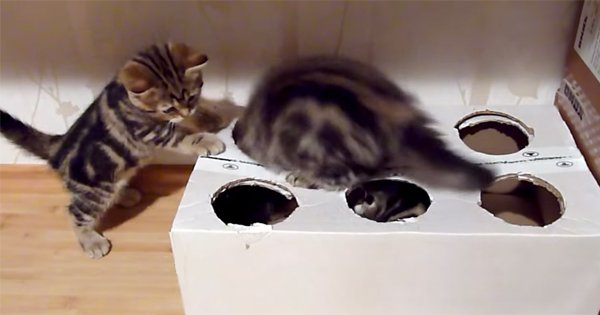 Она взяла обыкновенную коробку и за две минуты превратила ее в настоящий кошачий рай!