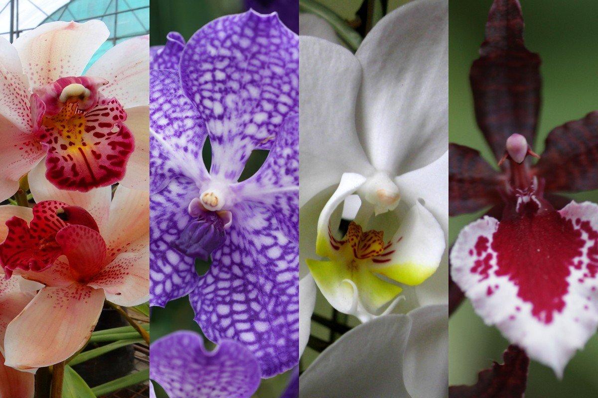 Почему нельзя дарить и принимать в дар орхидеи