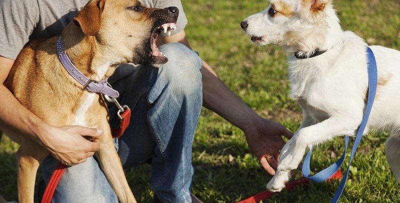собака и человек картинки