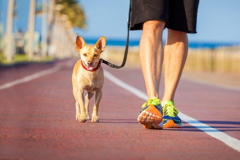 собака и хозяин фото