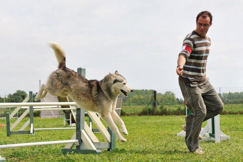 собака и хозяин игра