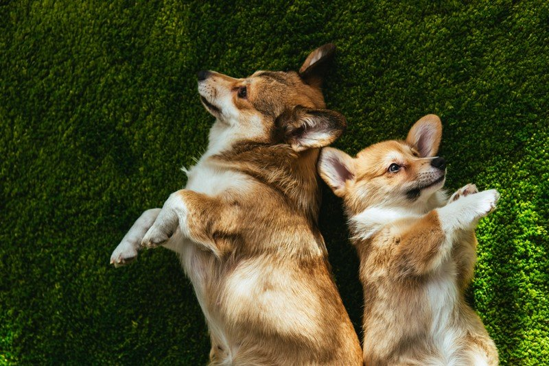 воспитание собаки до года