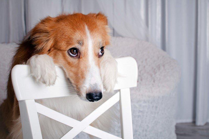 воспитание собаки после года