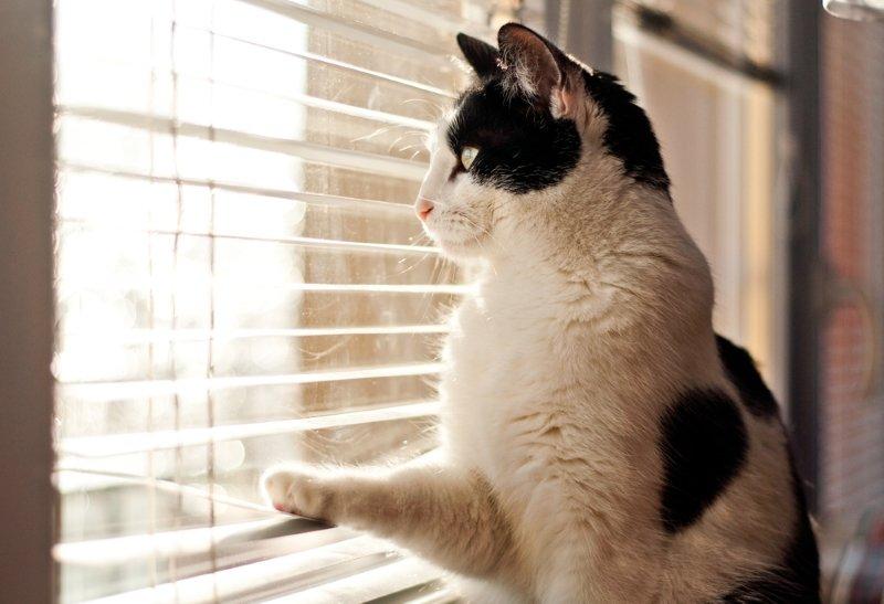 кот живет в квартире