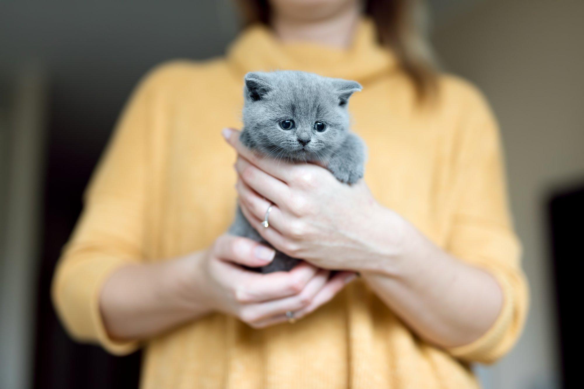 кошка на руках фото