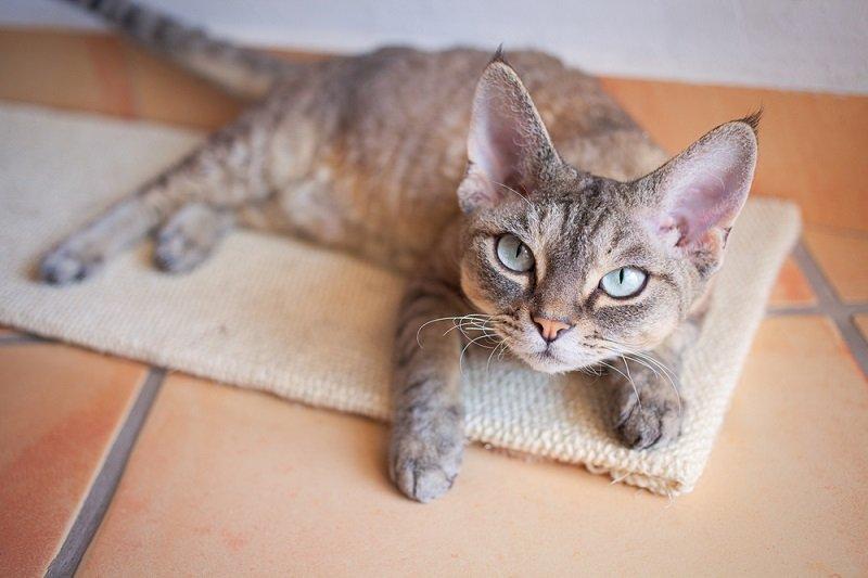 Коты по знаку зодиака и к какой породе ты принадлежишь
