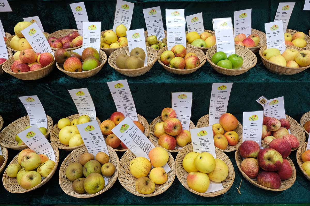 Что означают разные цвета яблочной кожуры