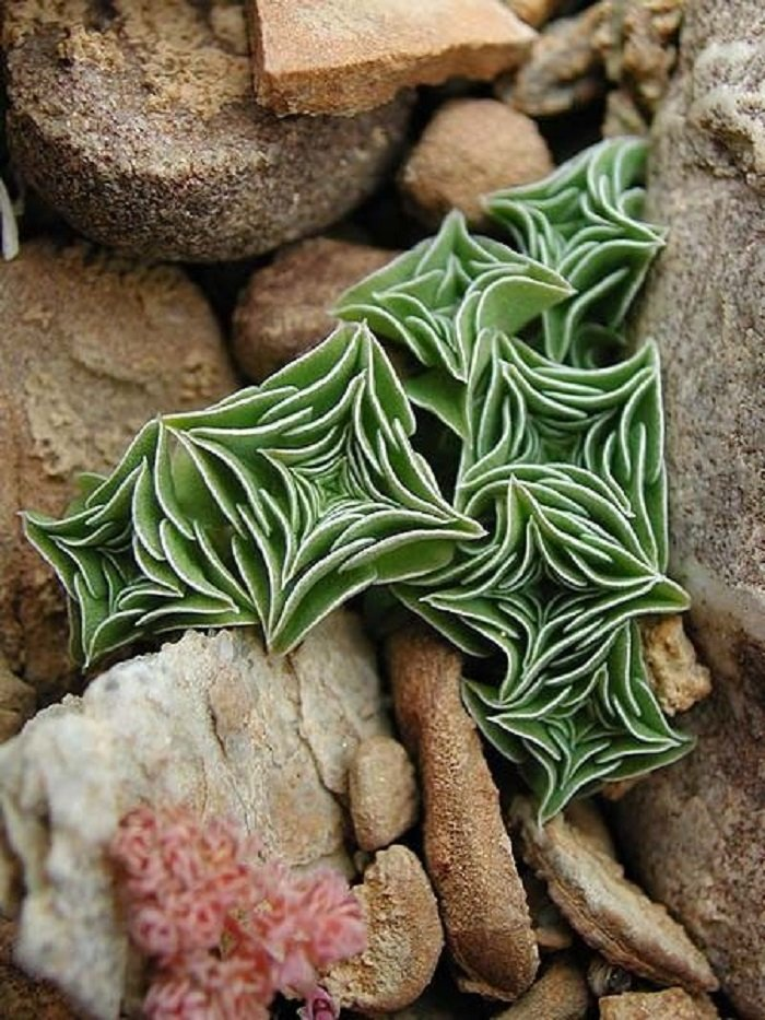 комнатные растения фото