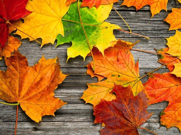 листья для творчества