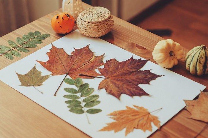 осенние листья для творчества