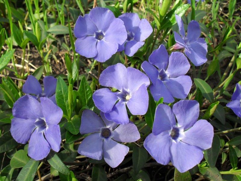 Какие цветы посадить в память о родных Советы,Память,Растения,Родственники,Традиции,Цветы