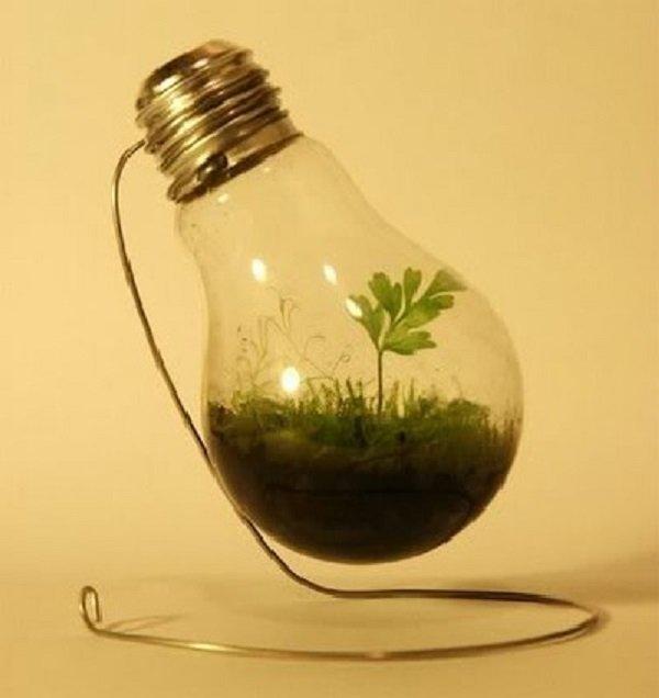 растение в лампочке